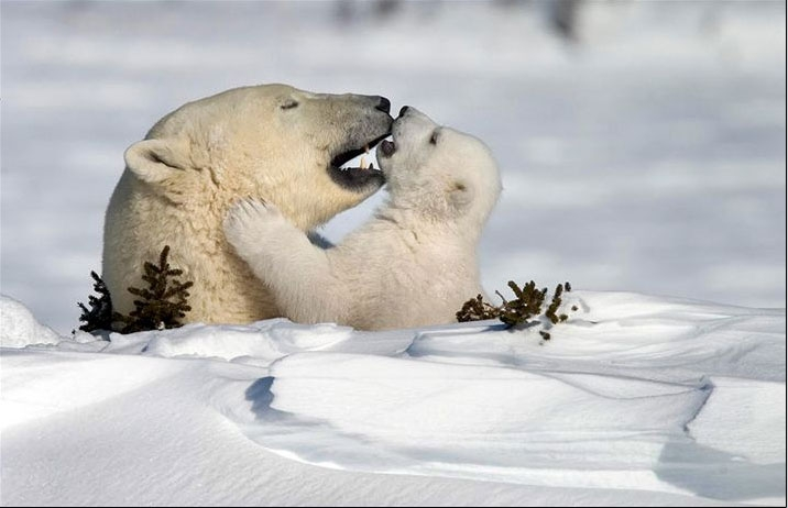 عکسهای برتر دنیای حیوانات به انتخاب نشریه نشنال جئوگرافی irannaz.com