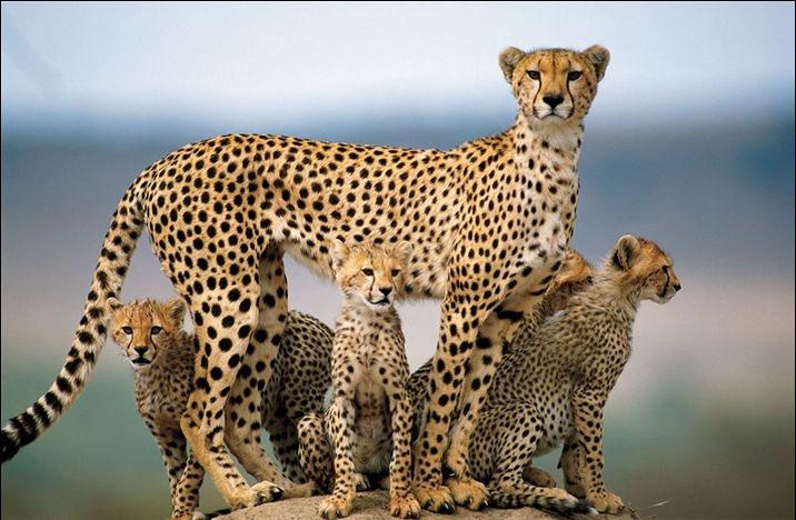 تبریک حامله شدن عکسهای برتر دنیای حیوانات به انتخاب نشریه نشنال جئوگرافی