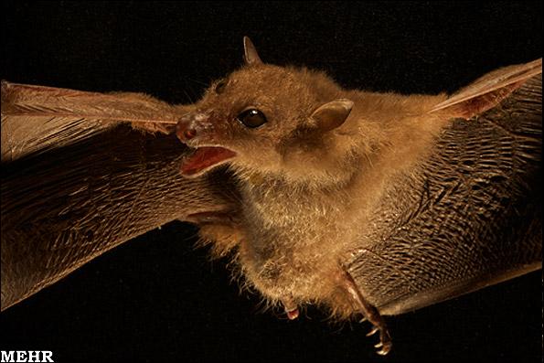 تصاویر جدیدترین حیوانات کشف شده