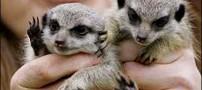 عکسهای بچه حیواناتی که سر راهی هستند!!