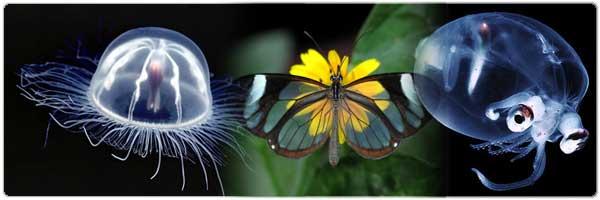 عکسهای ده جانور شفاف دنیا ! irannaz.com