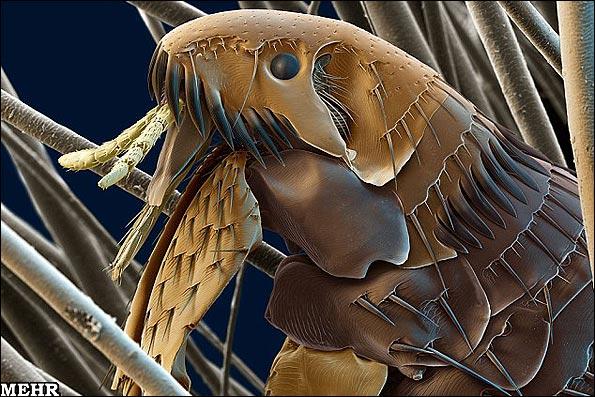تصاویر جالب میکروسکوپی حشرات