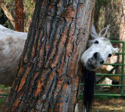 عکسهایی جالب و خنده دار ، www.irannaz.com