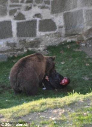 عکسهای حمله وحشتناک یک خرس به یک معلول!