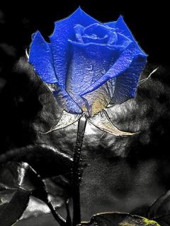 تصاویر زیبای پشت زمینه موبایل ، www.pixnaz.info