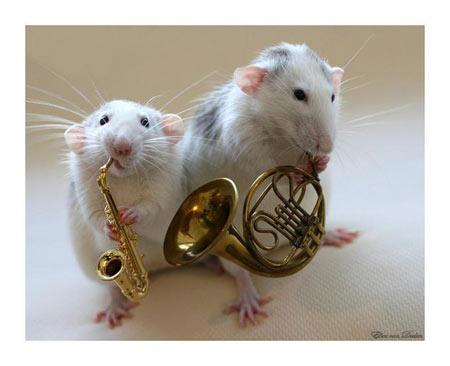 عکسهایی از موشهای هنرمند
