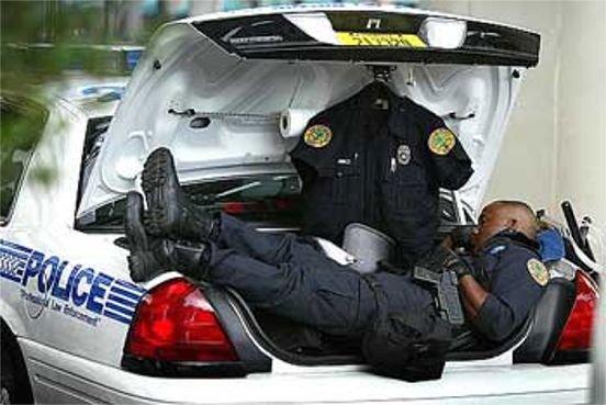 عکسهای خنده داراز وظیفه شناسترین نگهبانان