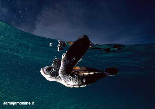 عکسهایی از اعماق اقیانوسها ، www.irannaz.com