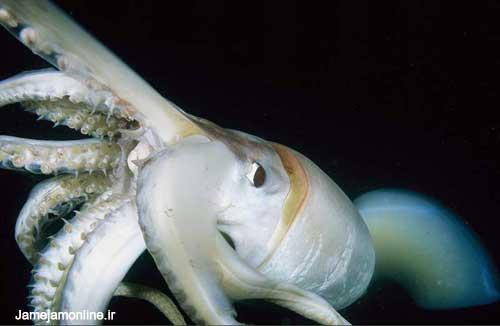 عکسهایی از اعماق اقیانوسها