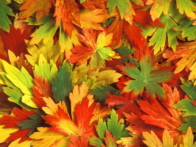 عکس های زیبا و دیدنی از فصل پاییز