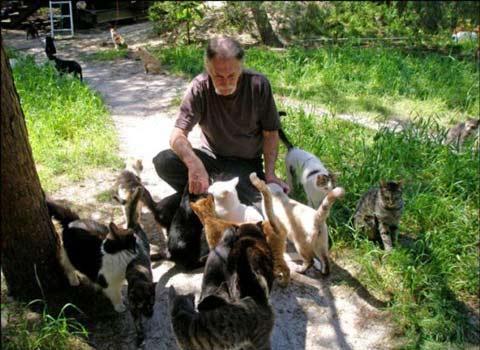 عکسهای تنها سرزمین ویژه گربهها در جهان