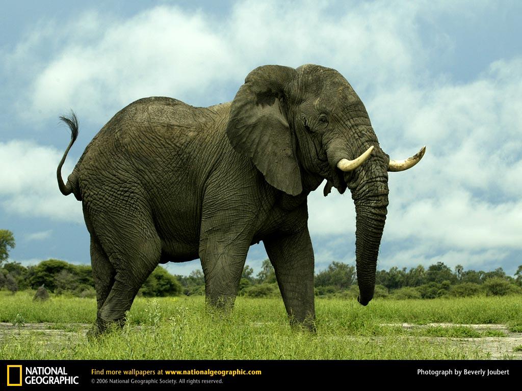 عکسی از تولد بچه فیل !!