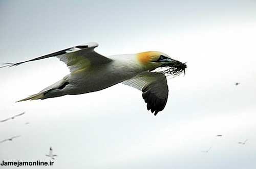 ده عكس بسیار تماشایی از پرندگان