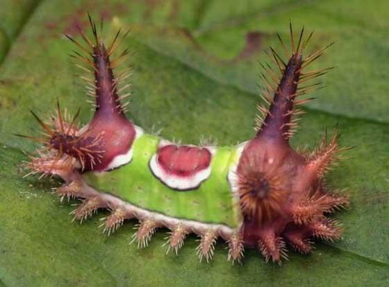 عکسهایی از عجیب ترین خزندگان دنیا