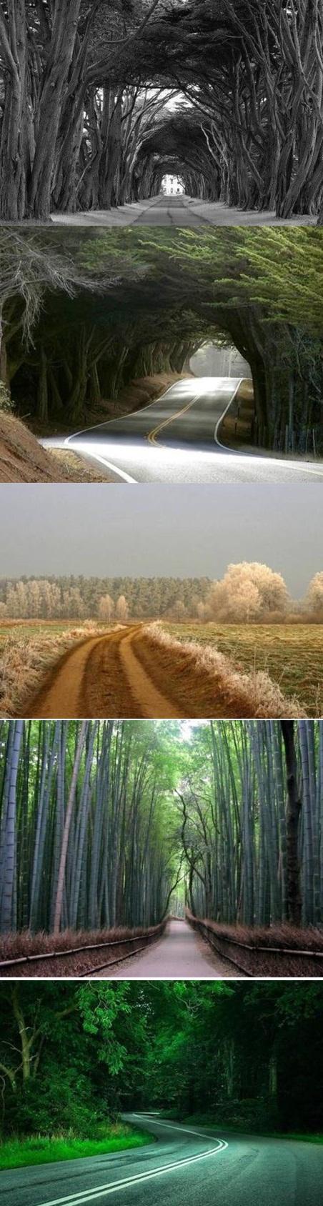 عکس هایی بی نظیر از زیباترین جاده های دنیا