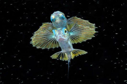 عکس هایی جالب و دیدنی از عجایب اقیانوس