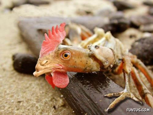 وقتی حیوانات مختلف با هم ازدواج کنند!! (تصویری)