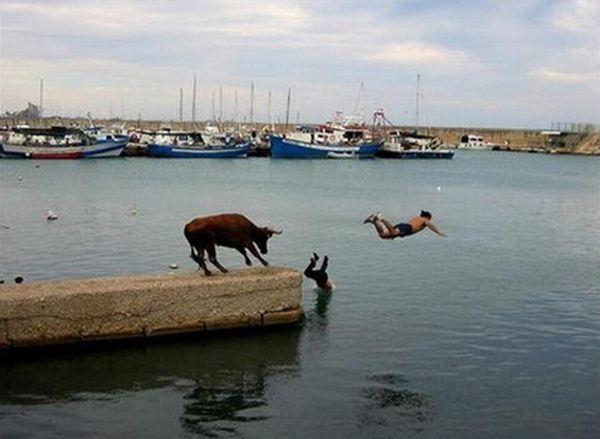 عکس هایی بسیار خنده دار از لحظات مختلف