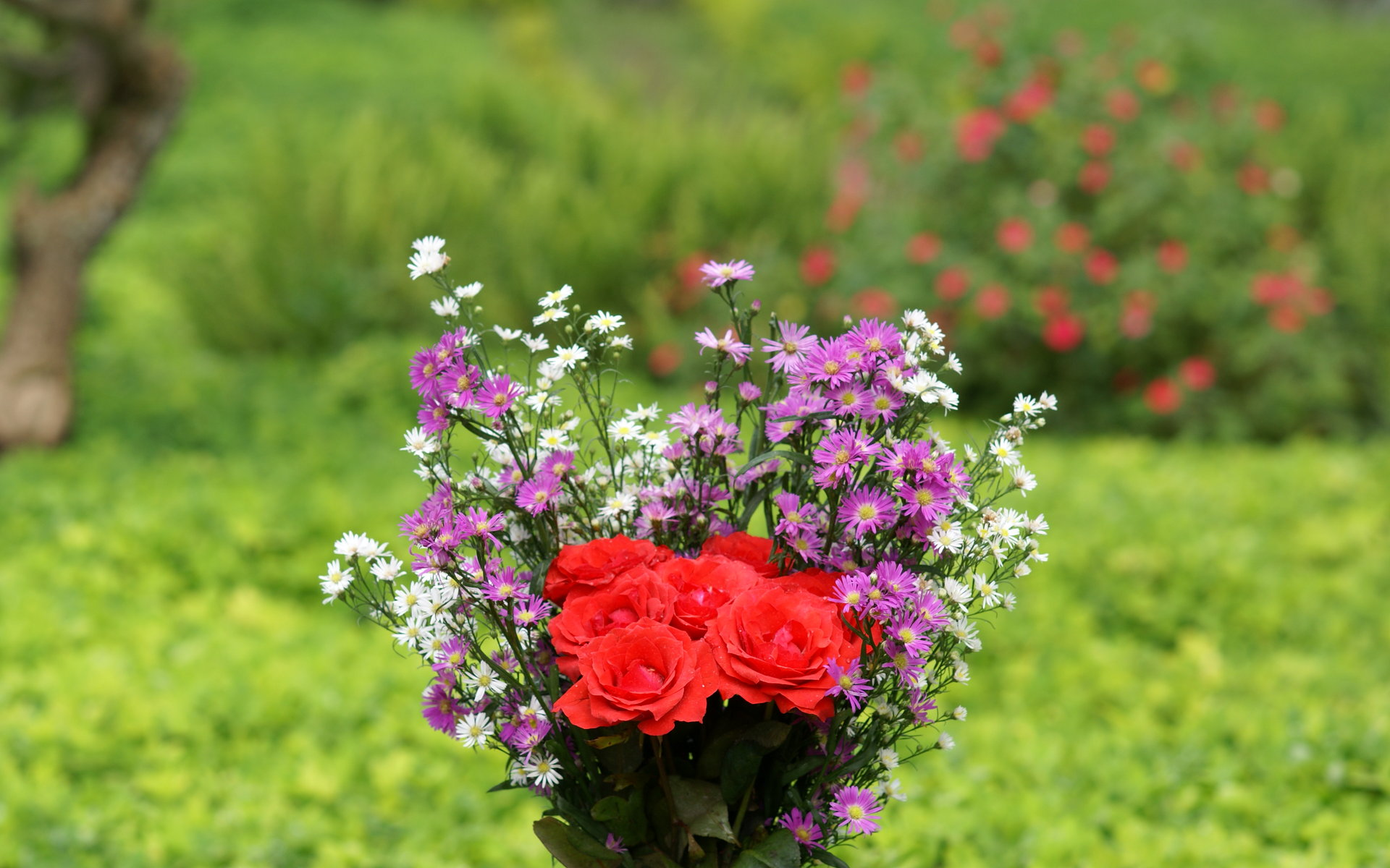 گلهای رز بسیار زیبا تقدیم به همه بینندگان ایران ناز | www.irannaz.com