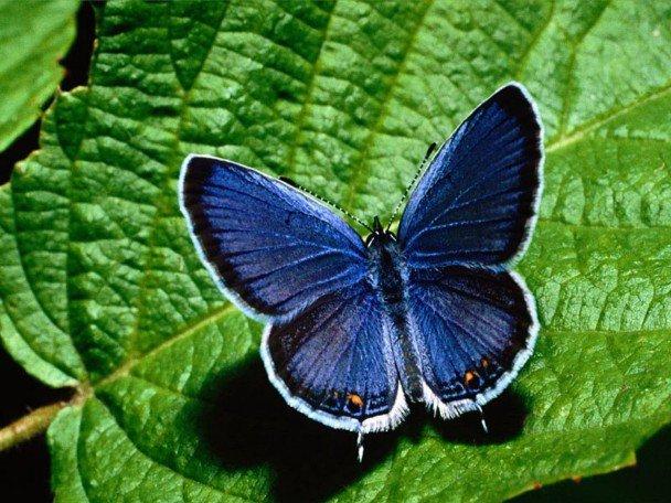 عکس هایی بسیار زیبا از پروانه های کمیاب