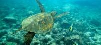 عکس هایی شگفت انگیز از موجودات دریا