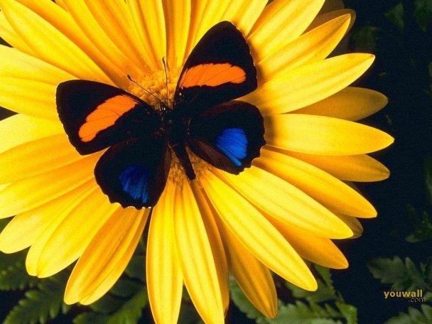 عکس هایی از پروانه های بسیار زیبا (هنر پروردگار)