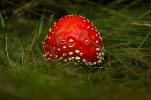 عکس هایی از عجیب ترین و زیبا ترین قارچ های دنیا