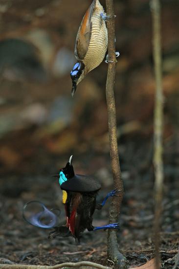 تصاویری از پرندگان زیبا و بسیار کمیباب روی زمین