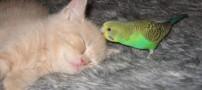 عکس هایی جالب از رابطه دوستانه طوطی و گربه