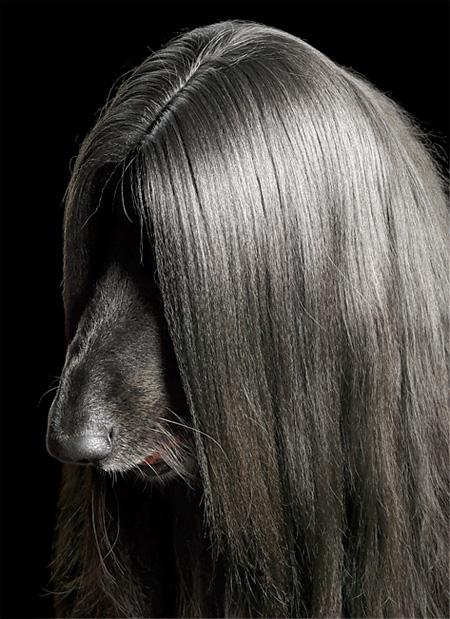 عکس هایی از عجیب ترین و زیباترین سگ های دنیا