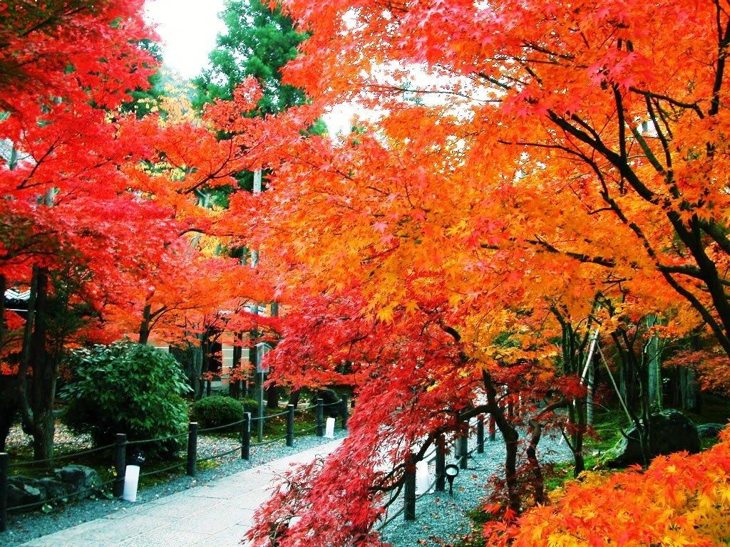 عکس هایی زیبا و بی نظیر از برگ درختان