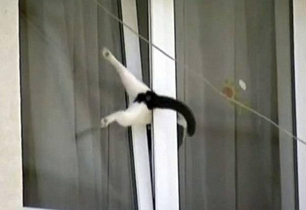 عکس هایی بسیار خنده دار از حیوانات کنجکاو