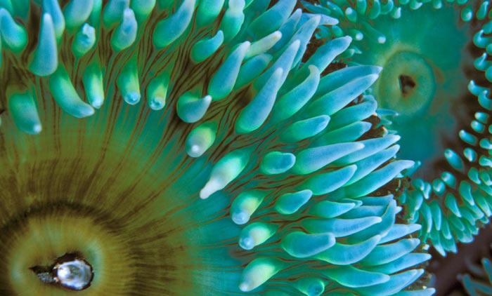 عکس هایی شگفت انگیز از موجودات دریا | www.yordfun.com