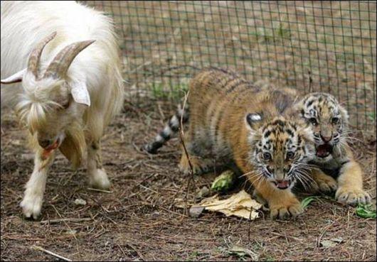 عکس هایی بسیار بامزه و دیدنی از حیوانات