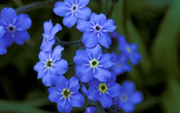 گل هایی بسیار زیبا و کم یاب تقدیم به همه ایرانیان