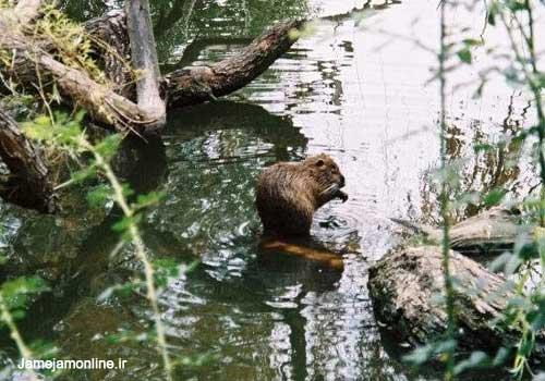 عکس های حیوانات نمادین كشورهای مختلف جهان