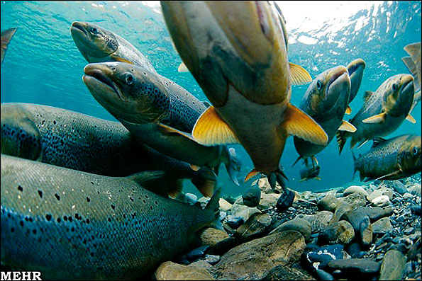 عکس هایی از شگفتی های حیات وحش در قطب