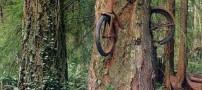 عکس درخت بسیار عجیب و غریب دوچرخه ای !!!!