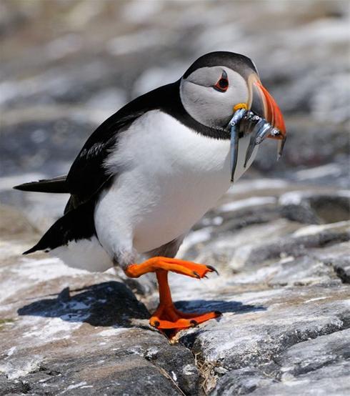عکس هایی بسیار  دیدنی از شکار پرندگان
