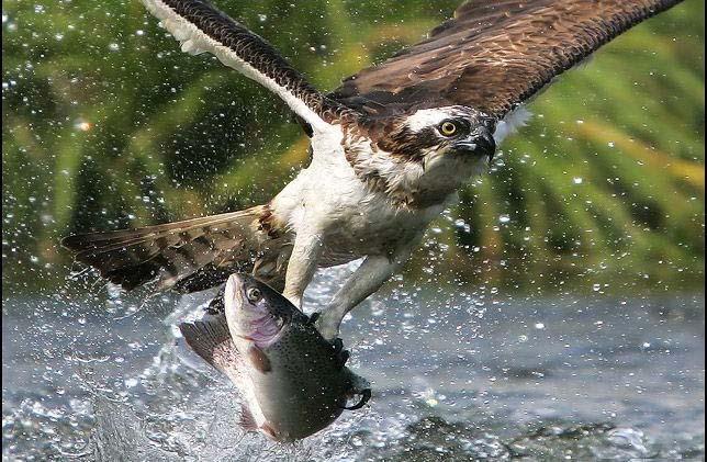 عکس های شکار پرندگان