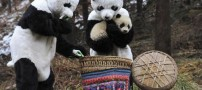 تولید پدر و مادر تقلبی توسط چینی ها (+عکس)