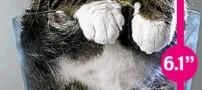 تصاویری باور نکردنی از کوچک ترین گربه جهان