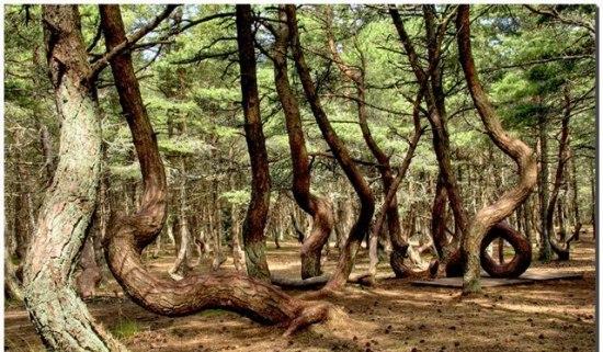 دختری که درختان را به رقص درآورد