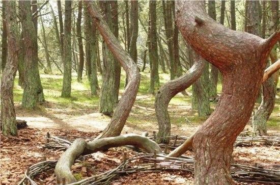 دختری که درختان را به رقص درآورد+عکس