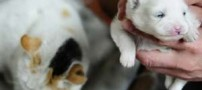 تولد بسیار عجیب توله سگ از یک گربه+عکس