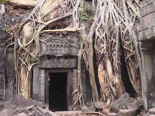 عکس های درختان بسیار شگفت انگیز و کمیاب