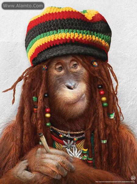 عکس های میمون های فشن و فوق العاده خنده دار