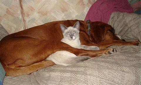 عشق از نوع سگ و گربه ای دیده بودید؟!