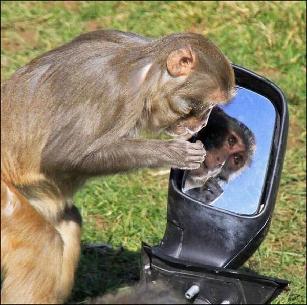 عکس هایی با مزه از غارت یک ماشین توسط میمونها