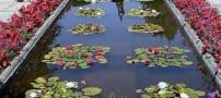 عکس هایی دیدنی از باشکوه ترین باغ دنیا